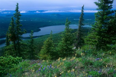 Canada Leads the World … On Forest Degradation